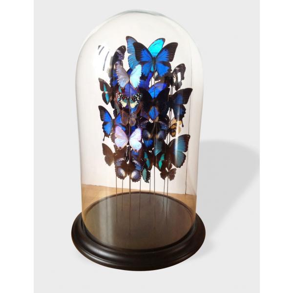 grande envol e de papillons sous cloche bon tat. Black Bedroom Furniture Sets. Home Design Ideas