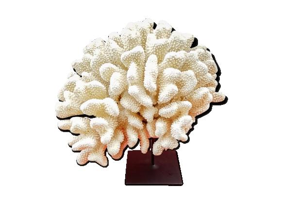 Corail blanc sur socle métal