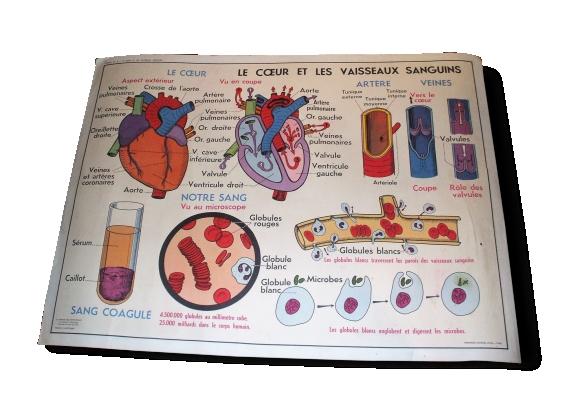 Affiche scolaire le coeur