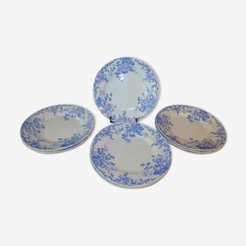 Série de 10 assiettes plates campanules bleues