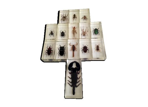 Insectes en inclusion résine